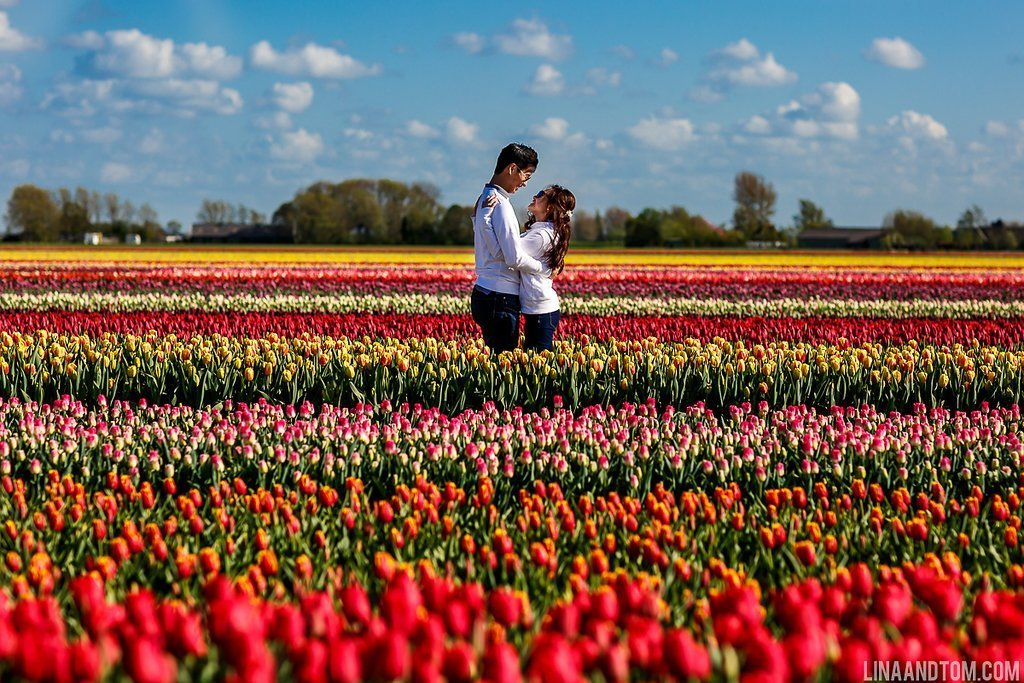 tulip field in amsterdam - engagement photography
